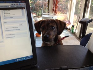 puppy not conducive to working